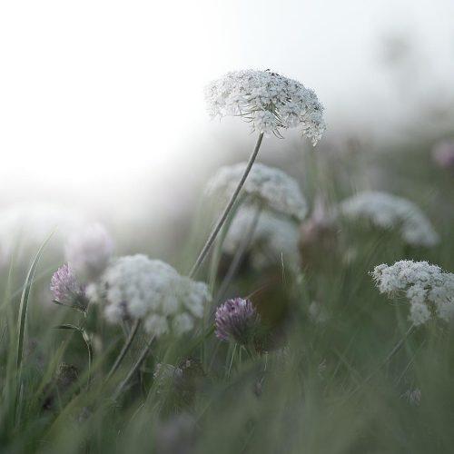 Blumenwiese Fotografie
