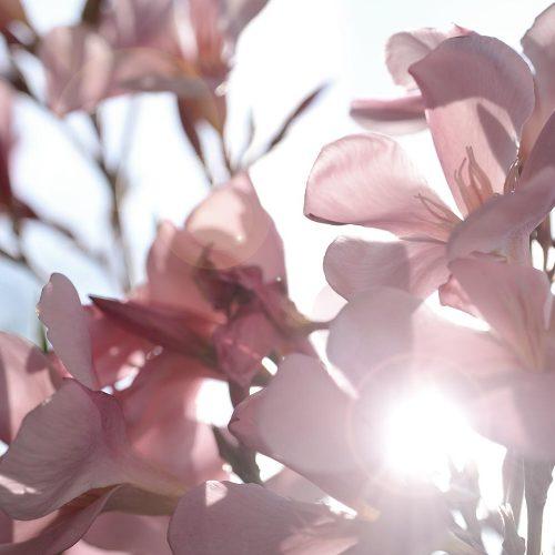 Pflanzenfotografie Frisch ans Werk